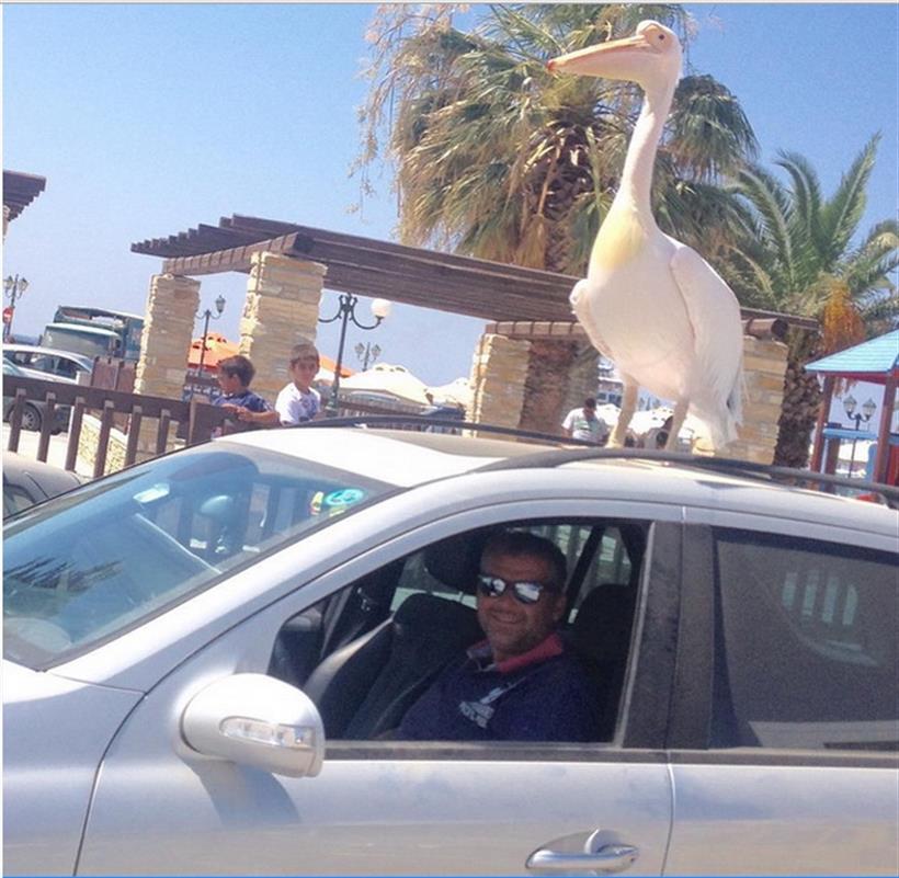 Γιώργος Λιάγκας: Μας συστήνει το... πουλί του!
